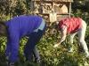 Meppel 2 nov. 2019: Natuurwerkdag brengt veel vrijwilligers op de been