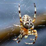 Speuren naar spinnen in het Drents-Friese Wold