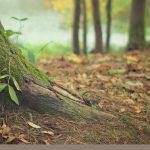 Ondanks regen in oktober nog neerslagtekort