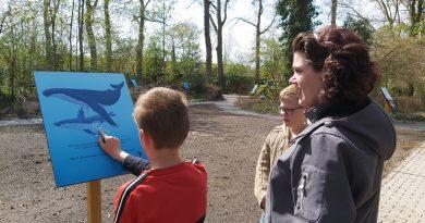 Walvisroute bij Miramar Zeemuseum in Vledder