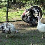 Nieuwe bewoners in de Hertenkamp Wilhelminapark