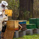 Wandeling 'De honingbij' in de Zwarte Dennen