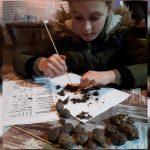 Kinderactiviteit 'Uilenballen pluizen' De Wheem