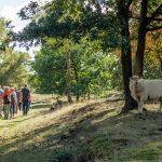 Ontmoetingswandeling bij Buitencentrum Drents-Friese Wold